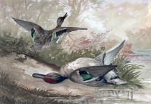 ducks-vintage-painting