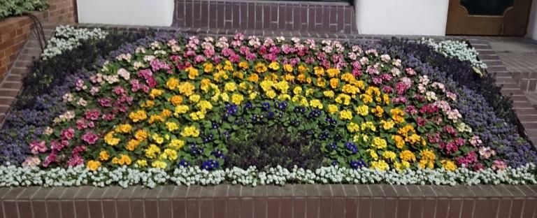 11116395355_b1149a1f49_k-jpgflower-rainbow