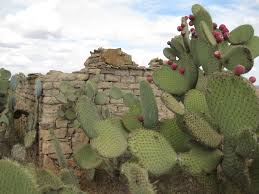cactus-and-adobe-hut
