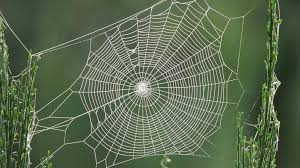 nice-spiderweb