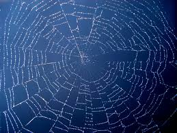 spiderweb-in-blue