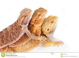 three-lizards