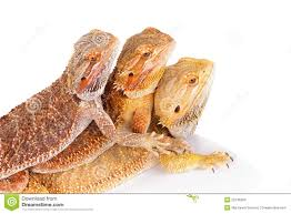 three-lizards