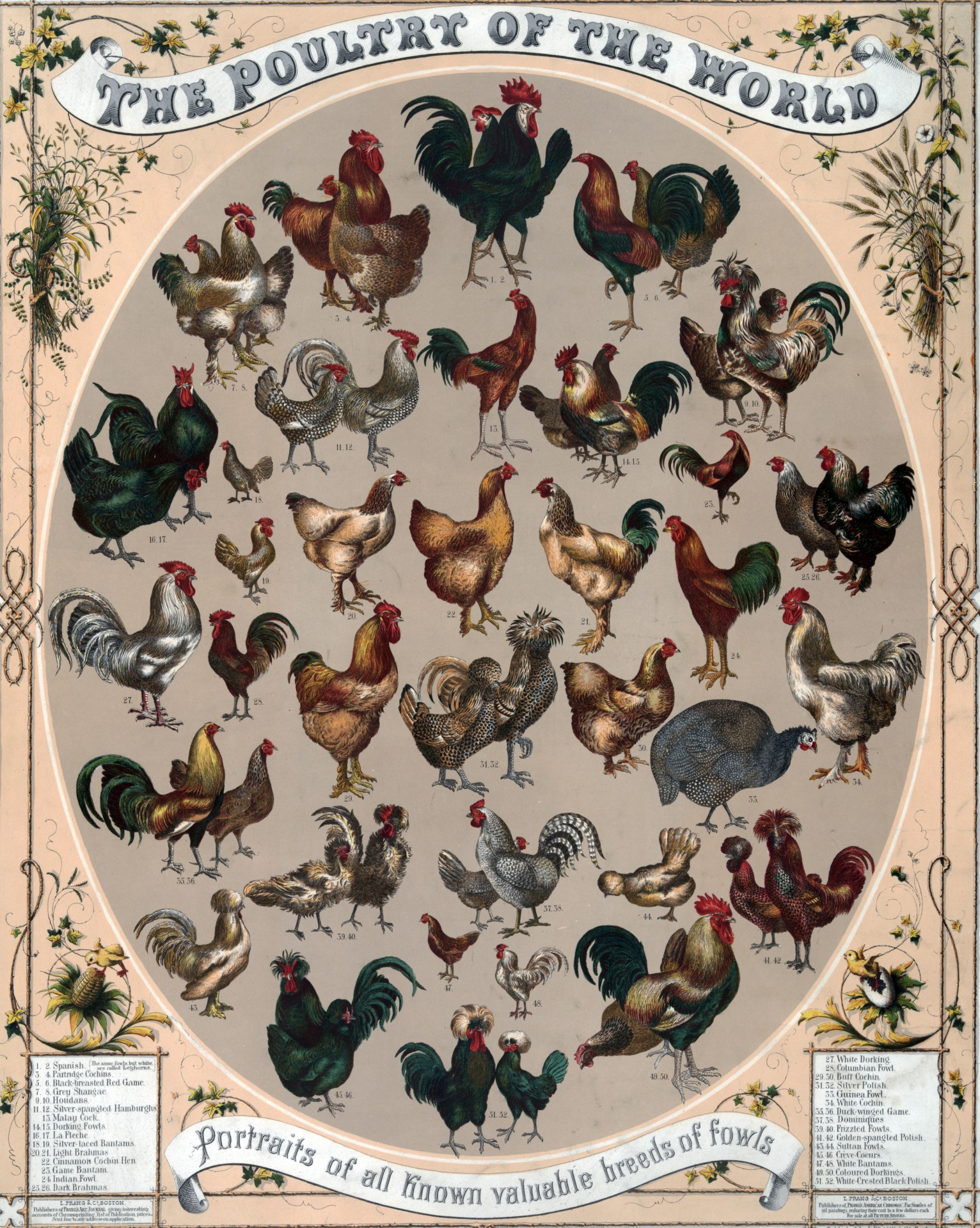 chickens-13939861844Sq.jpg
